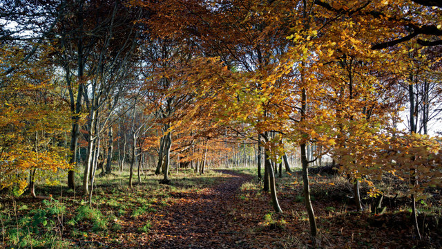 Woodland surrounding Cromarty House
