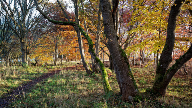 Woodland policies of Cromarty House