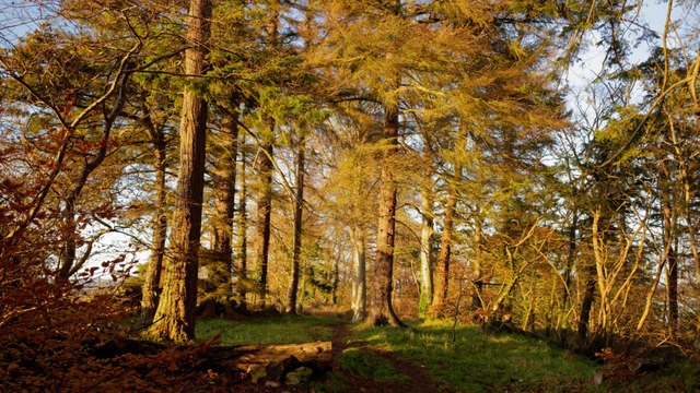Trees in the grounds of Cromarty House