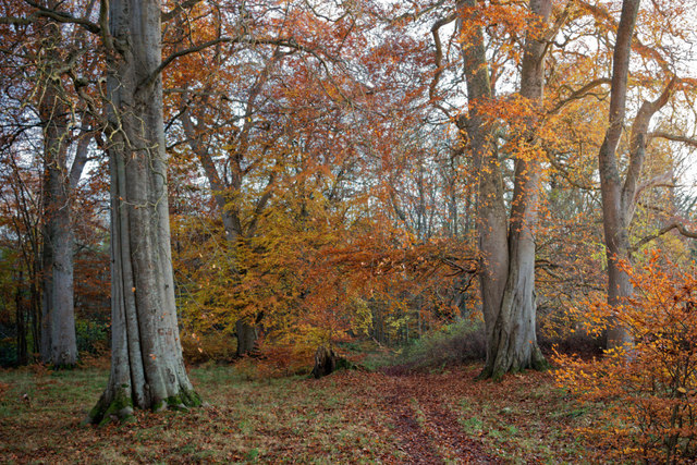 Path through the woods of Cromarty House