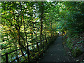 NS5667 : Path parallel to the river, Glasgow Botanic Garden by Stephen Craven