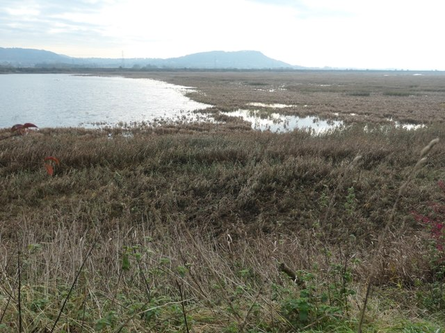 Open water and bog, canal deposit dump