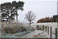 NT2339 : Field path to South Park Wood, Peebles by Jim Barton