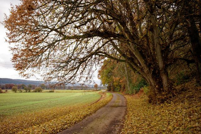 Estate road to Groam of Annat