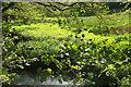 SS5530 : Meadow by Tawstock Stream by Derek Harper