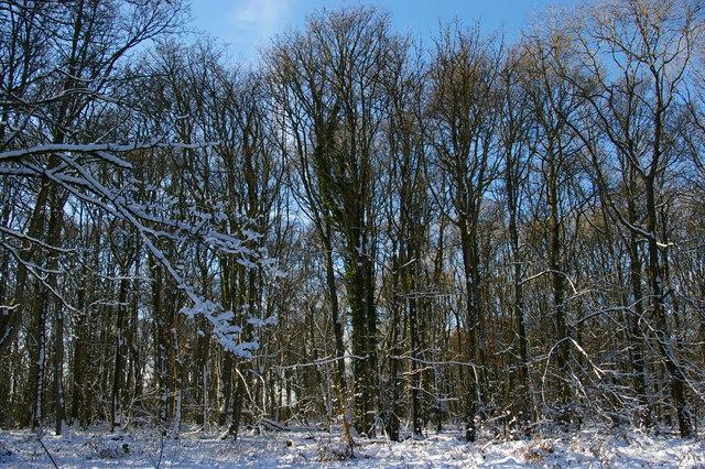 Aston Wood in snow