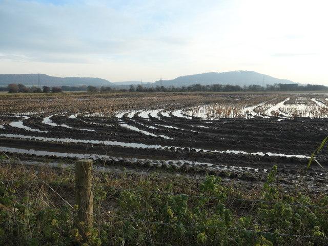 Waterlogged stubble field, Lordship Marsh