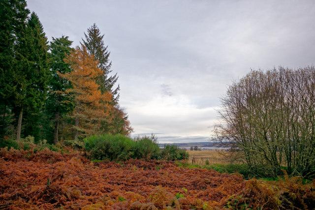 Woodland edge of the Novar Estate