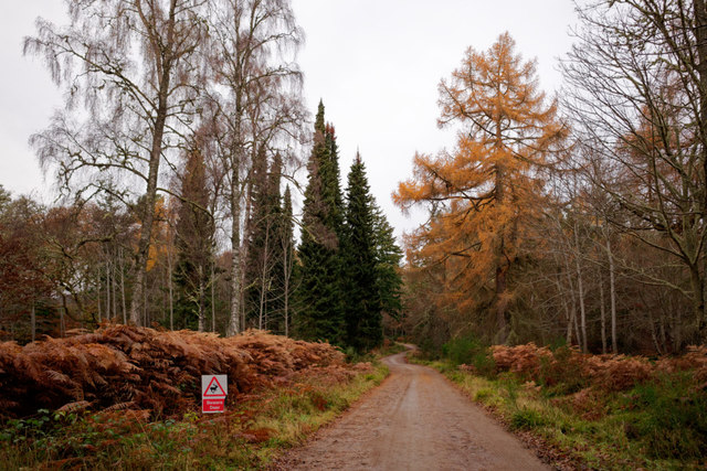 New forestry road through the Novar Woodlands
