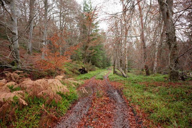 Long-established track through the Novar forestland