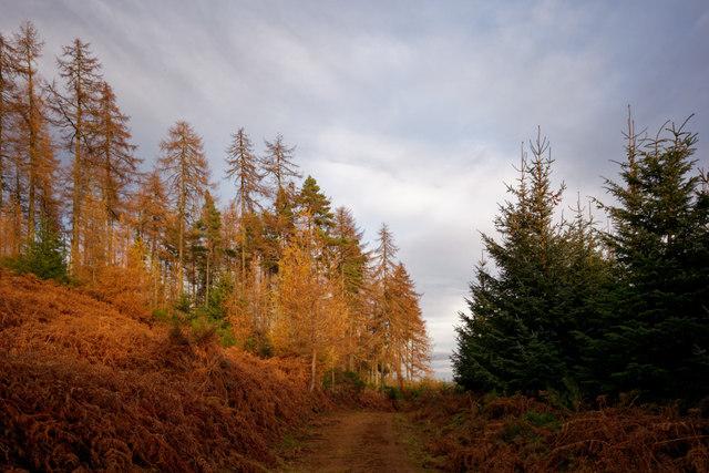 Track in the Novar Forest