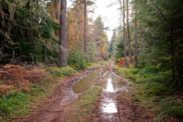 Forest track near Meann Chnoc
