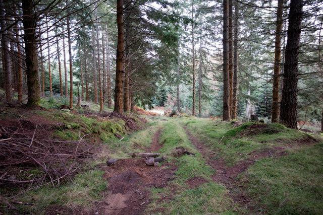 Minor forest track in the Novar Estate
