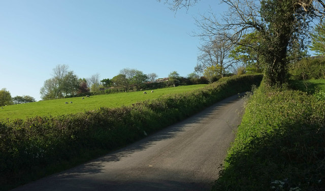 Sheep by lane to Hannaford