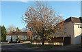 SX8964 : Cherry tree, Sherwell Valley Road, Torquay by Derek Harper