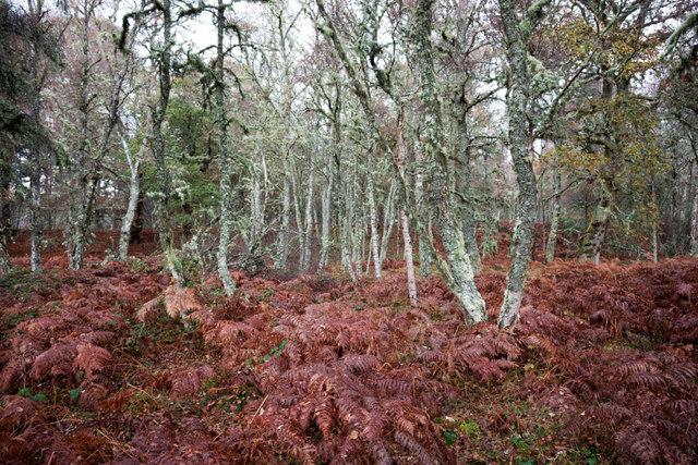 In Balblair Wood