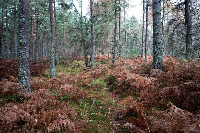 Minor footpath in Balblair Wood