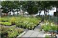 NZ3281 : Plant nursery in Blyth by DS Pugh