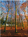 SK5969 : Autumn sunset in Gleadthorpe New Plantation by Andy Stephenson