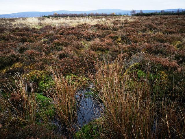 Underfoot, Culloden Battlefield