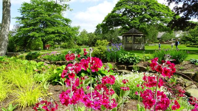 Harrogate - Harlow Carr Gardens - candelabra primula