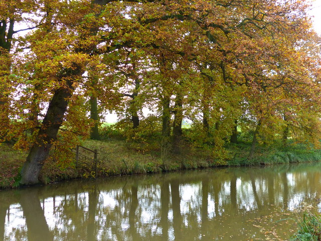 Trees along the Market Harborough Arm of the Grand Union Canal