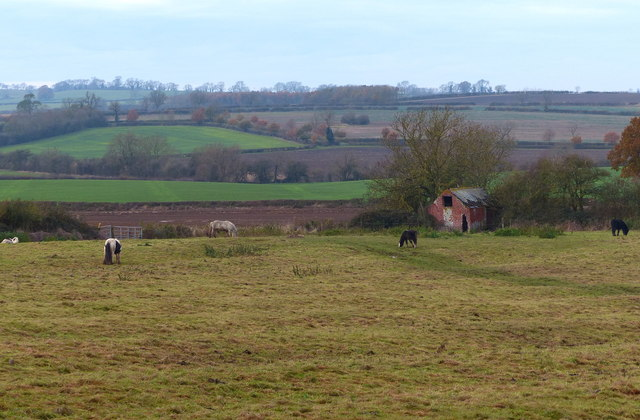 Horses near Gallow Hill