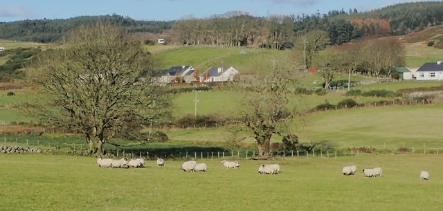 Mourne Blackface Sheep on valley grazings between Ballywillwill Road and Drumnaquoile Road
