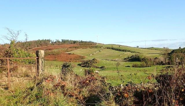 Sheep grazings below Drumkeeragh Forest