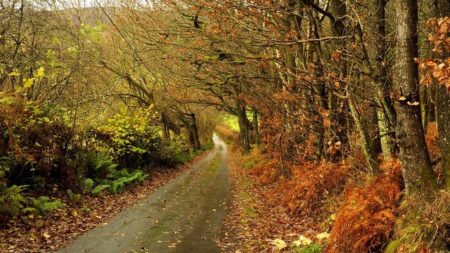 Lane and oak woodland