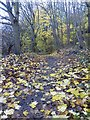 SK5232 : Late Autumn colour in Brandshill Wood by Graham Hogg