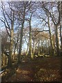 SK2680 : Woodland path on the Longshaw Estate by Graham Hogg