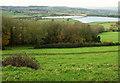 ST5466 : Belt of trees below Castle Farm by Derek Harper