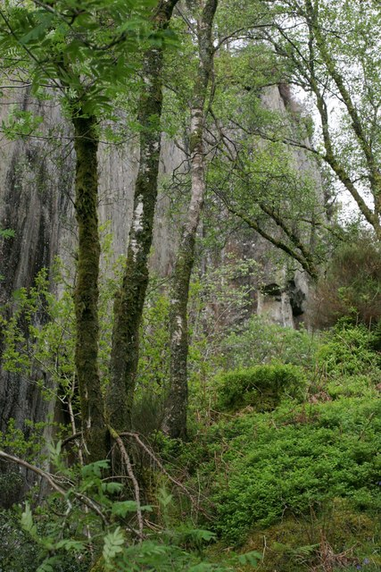 Old quarry in Ross Wood