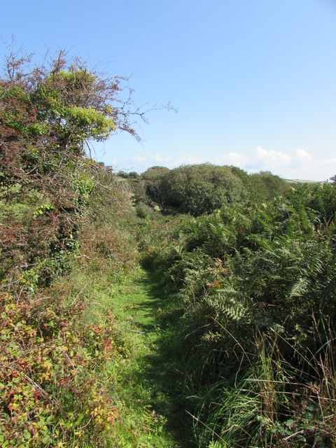 Yet another overgrown path in Cornwall