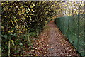 TQ0854 : Footpath at East Horsley by Peter Trimming