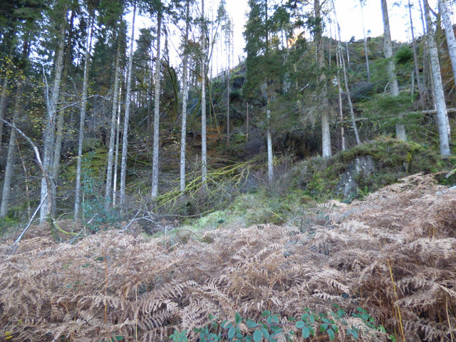 Fallen trees in Glen Finart