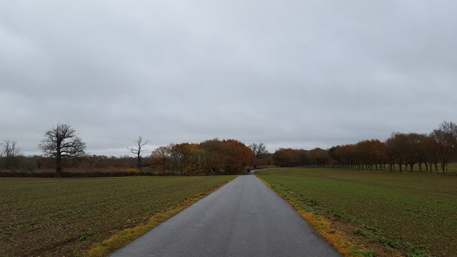 Road through the fields