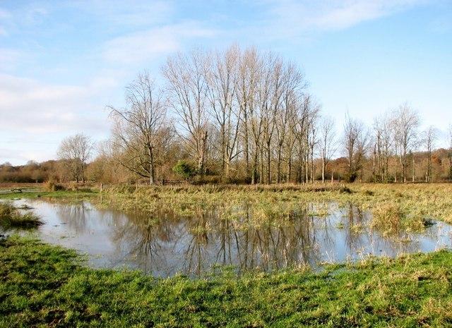 Flooded pasture on Marston Marsh