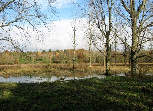 View across the northern edge of Marston Marsh