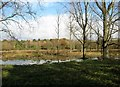 TG2105 : View across the northern edge of Marston Marsh by Evelyn Simak