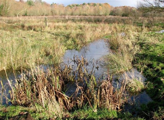 Pastures on Marston Marsh