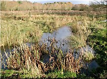 TG2105 : Pastures on Marston Marsh by Evelyn Simak