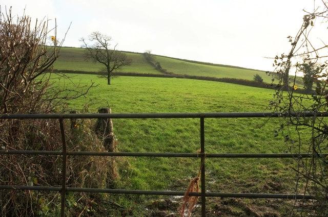 Hillside fields near Charford