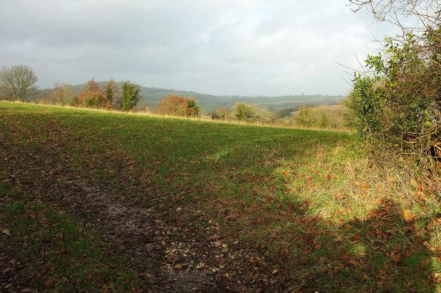 Field by Woodland Wood