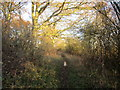 TL0192 : Footpath to Woodnewton by Jonathan Thacker
