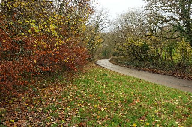 Autumn leaves, Brushford
