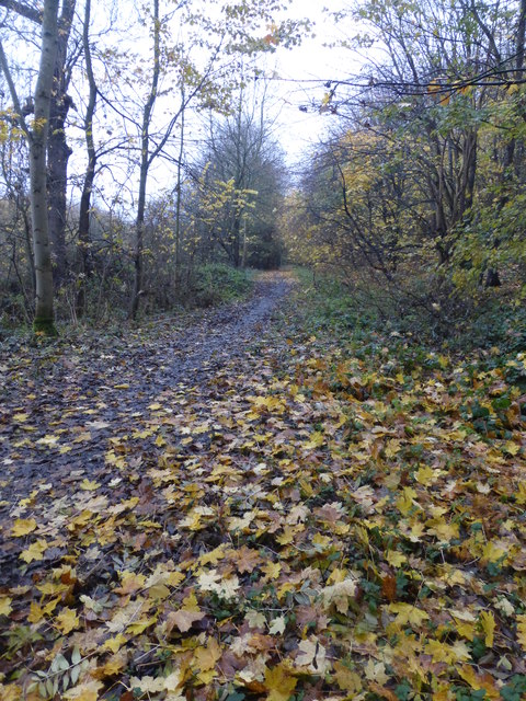 Late Autumn colour in the bridleway in Brandshill Wood
