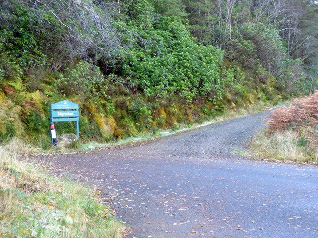 Forest track at Sligrachan