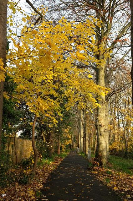 Autumn leaves, cycle path near Shiphay Bridge